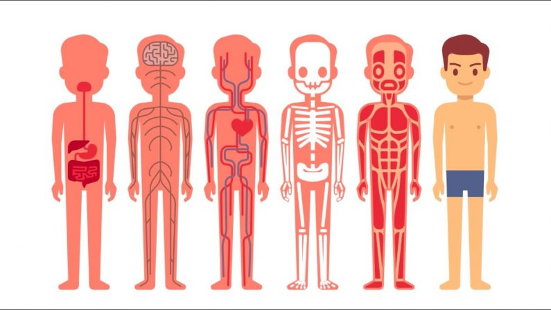Selecting the Best Marieb's Human Anatomy 9th edition Research Guides